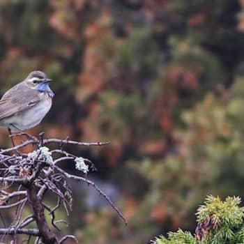 Luontoretki.: Muuttuva linnusto