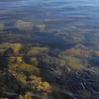 Luontoretki.: Hylkyjä Vaasan saaristossa