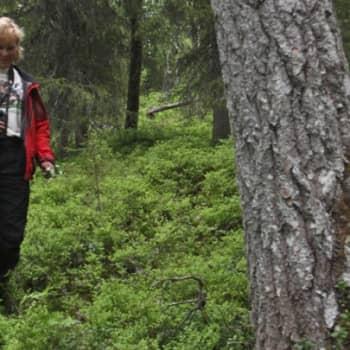 Luontoretki.: Saapungin perinnemaisemat