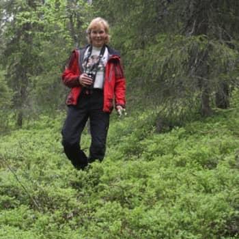 Luontoretki.: Kuusamon marjasato