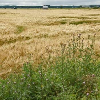 Luonto-Suomi.: Luonto-Suomen peltoilta