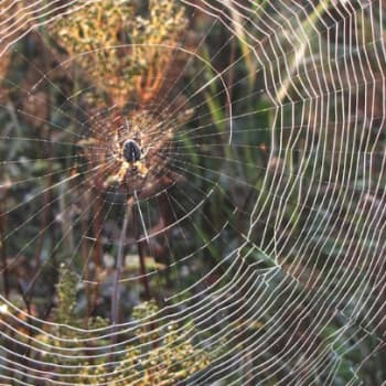 Minna Pyykön maailma: Hämähäkkien elämää
