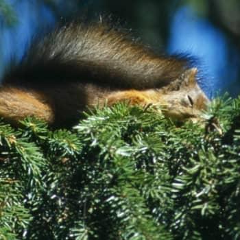 Minna Pyykön maailma: Eläinten unet