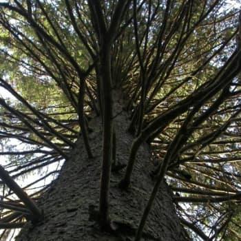 Luonto-Suomi.: Puijon metsät