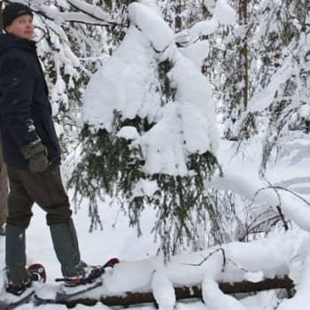 Luontoretki.: Vartiosaaressa lumikengillä 5.2.2012