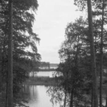 Ihminen ja luonto. Kirjailija A. E. Järvinen (1963)