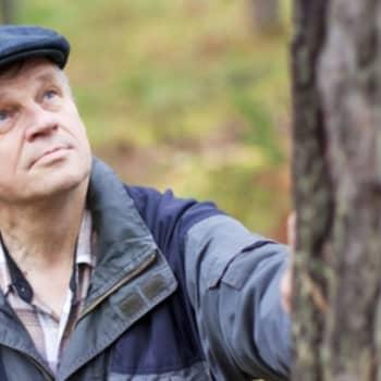 Metsäradio.: Metsänistutuksessa ei kannata vitkastella 5.9.2011