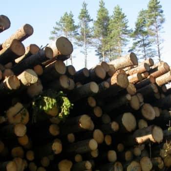 Metsäradio.: Puunkorjuuta Puijonlaaksossa 5.9.2011
