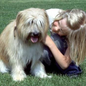 Teemana terveys: Onko lemmikki riski vai suoja?