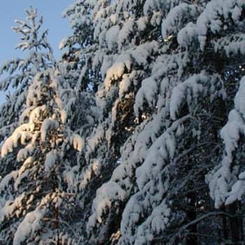 Metsäradio.: Riistaruokintaa Vierumäellä 10.1.1011