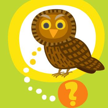 Oletko sinä pöllö?