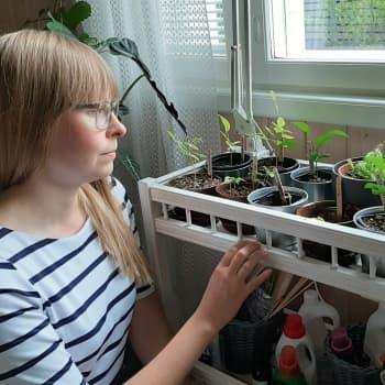 Hedelmät kaupasta ja siemenet kasvamaan - Annika Tiiton kasvatuskokeilun tulokset alkavat näkyä