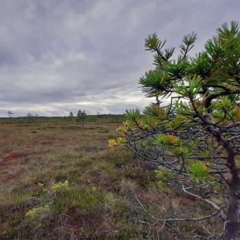 Luonto-Suomen suoilta