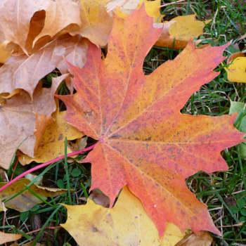 Höstens musik, vad uttrycker den?