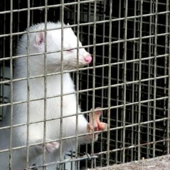 Coronasmitta hos djur