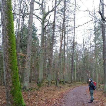 Simona i den stora skogen