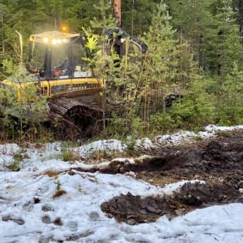 Lämmin syksy tuonut ongelmia metsäkoneiden kuljettajille