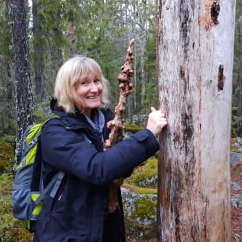 Stig över tröskeln och ta med familjen ut i skogen - det stärker barnen inför framtida stress
