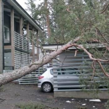YLE Turku: Mitä vakuutus korvaa myrskytuhoista?