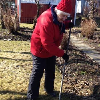 YLE Helsinki: Kevään merkkejä metsästämässä Herttoniemen siirtolapuutarhassa