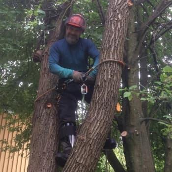 """YLE Helsinki: The Rasmuksen ex-manageri löysi uuden uran puun latvasta: """"Arboristina tiedän, miten kohteeni käyttäytyy"""""""