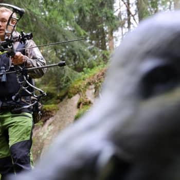 YLE Helsinki: Jousella saa nyt metsästää peuroja ja villisikoja