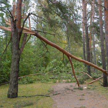 Röjningsarbetet efter stormen Aila kommer att pågå länge