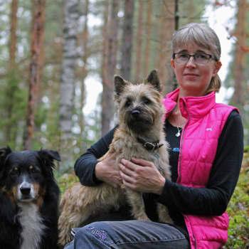Treenaa koiraa ennen Lapin vaellusta