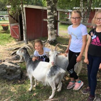 Eläintenhoitoleirillä opitaan jänniä asioita eläimistä