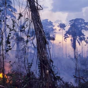 Brasilian palot huolestuttavat