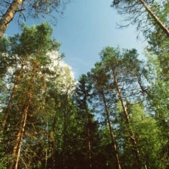 Viikon sitaattivinkki: Uudet ja vanhat puut