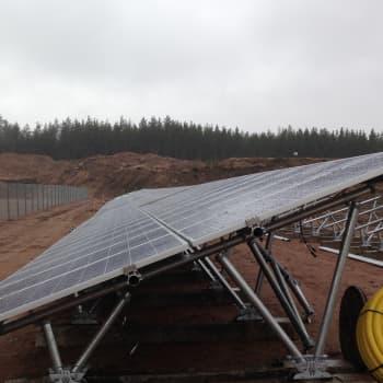 YLE Kymenlaakso: Haminaan tulee suuri aurinkovoimala - linnunkakkakaan ei haittaa aurinkopaneeleita