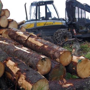 Metsänhoidon eri vaiheet
