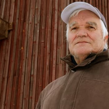 Metsäradio.: Pöntötys pelasti tuulihaukat