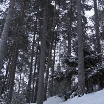 Metsäradio.: Superfoodia suomalaismetsistä