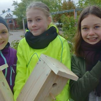 Metsäradio.: Koululaisten metsäkokemuksia