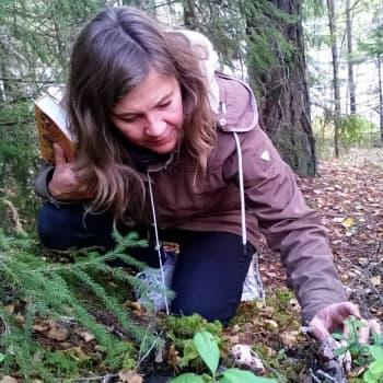 Metsäradio.: Sienet verkostoivat puita