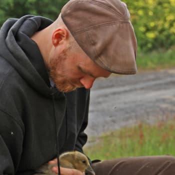 Metsäradio.: Enemmän sorkkaeläimiä metsiin