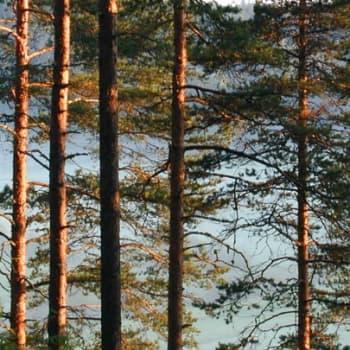 Metsäradio.: Ajankohtaista metsäasiaa 2.5.2011