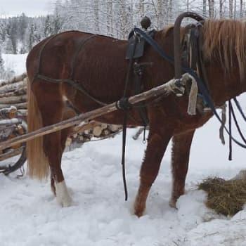 Metsäradio.: Hevosen varusteet