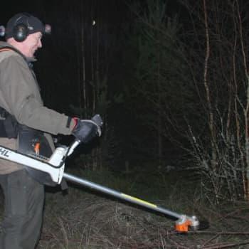 Metsäradio.: Taimikon raivausta otsalampun valossa