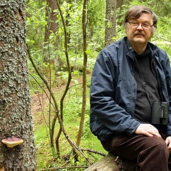 Metsäradio.: Luonnonsuojelualue kaupungissa