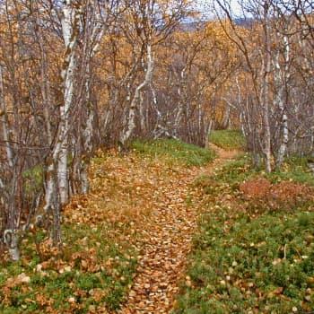 Metsäradio.: Syksyä ja ruskaa Raattamassa