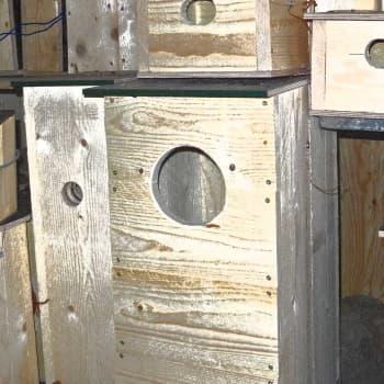 Metsäradio.: Pöllöille ja telkille sopivat pöntöt
