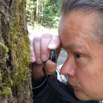 Metsäradio.: Sammalten kirjo lumoaa metsissä
