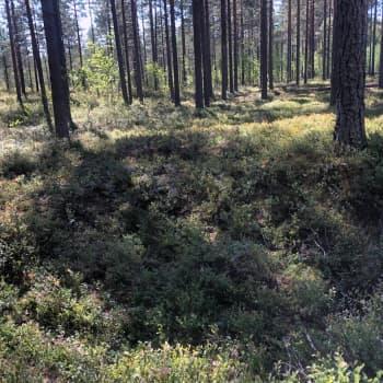 Omituinen kuoppa metsässä