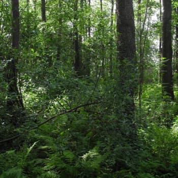 Metsäradio.: Kerttumetsä huipentaa kesän