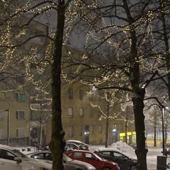 Metsäradio.: Kaupunkilehmusten tähdet loistavat
