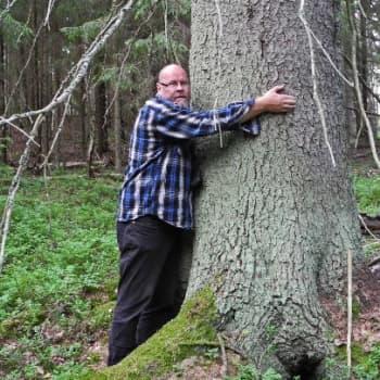 Metsäradio.: Suomen suurimpia puita etsitään