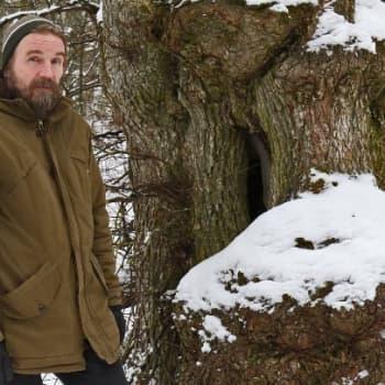 Metsäradio.: Vanajaveden kynäjalavat